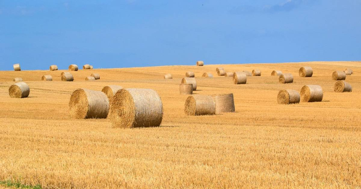Maaseudun perustamistuki voi helpottaa yrityksen perustamista maaseuduksi luokiteltavalle alueelle.